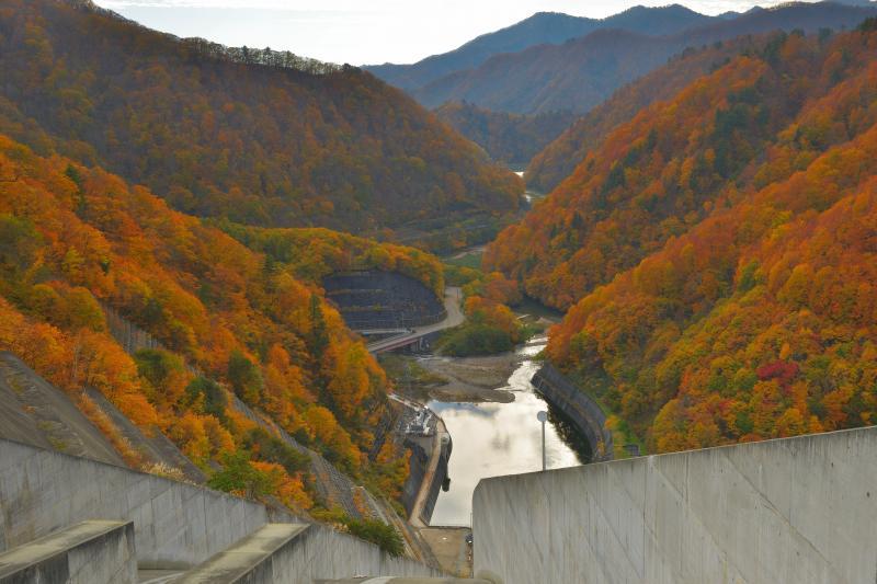 [ 堤から下流を望む ]  ダム下流の斜面にはオレンジと赤の紅葉が広がっていました。ダム堤の横に駐車場があり、歩いてすぐにこの絶景を味わうことができます。
