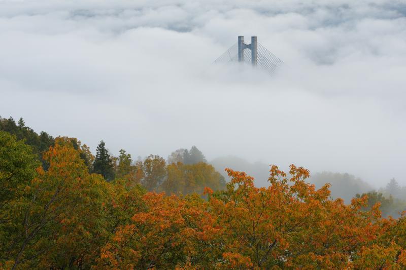 [ 紅葉雲海 ]  展望台からは紅葉した木々と雲海から頭を出す秩父ハープ橋の絶景が広がっていました。