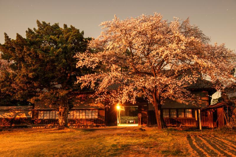 [ 月夜の長屋と桜 ]  満開と月明かりが重なり、幻想的な日本の春の美になりました。