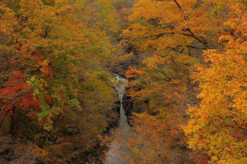 [ 八丁暗がり ]  渓谷で最も川幅が狭い場所で、動物が飛んで渡れそうな場所です。