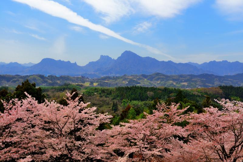 [ 雲の一本道  ]  桜溢れる「後閑城址公園」。奥には奇岩・妙義山がそびえています。