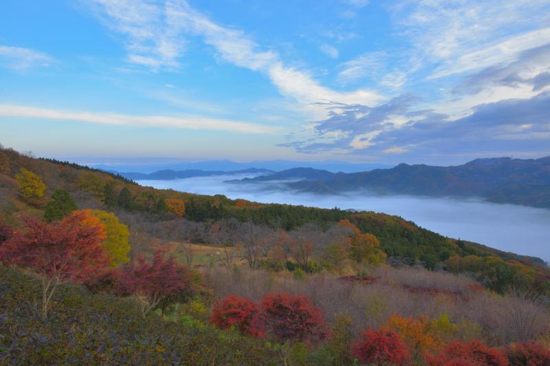 [ 紅葉と雲の大河 ]  春には山桜、初夏には紫陽花が咲き誇る美の山。秋には赤やオレンジに染まる斜面が広がり、谷間を埋め尽くすほどの雲海を見ることができました。