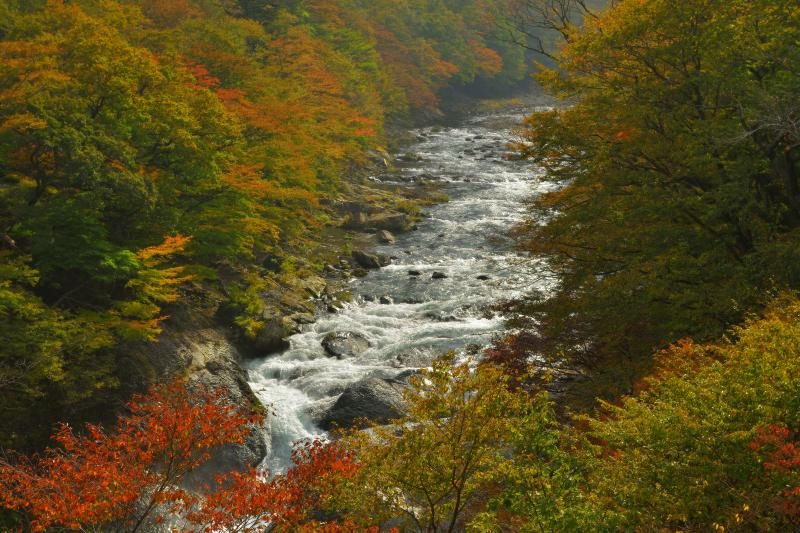 [ 塩原渓谷の紅葉 ]  色づき始めの渓谷。紅葉時は多くの観光客が訪れます。