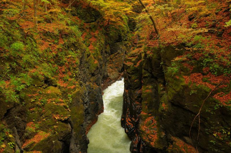 [ 鹿飛橋から ]  渓谷の一番人気のポイントである鹿飛橋。赤い橋からは左右が切れ落ちた深い谷を間近に見ることができます。