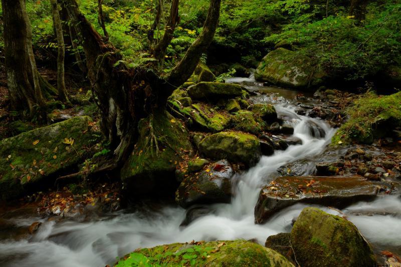 [ 宇津江渓流 ]  瀬のようになっている場所が多く、渓流風の写真を数多く撮影することができます。