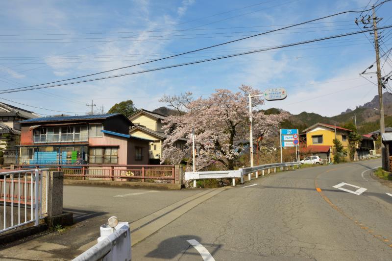 [ 菅原のしだれ桜 ]