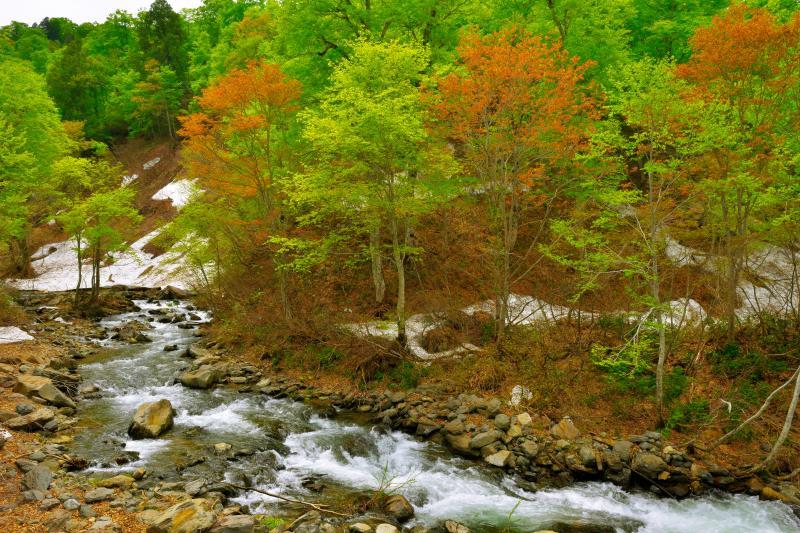 [ 残雪と新緑の中を ]  残雪が残る山の斜面、萌える新緑、透明度の高い渓流。日本の原風景を感じることができる場所です。