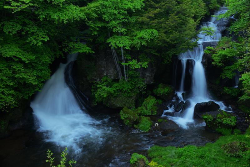 [ 夏の竜 ]  夏の早朝に撮影。紅葉時期の華やかさはありませんが、緑に包まれしっとりとした竜頭の滝を満喫することができました。