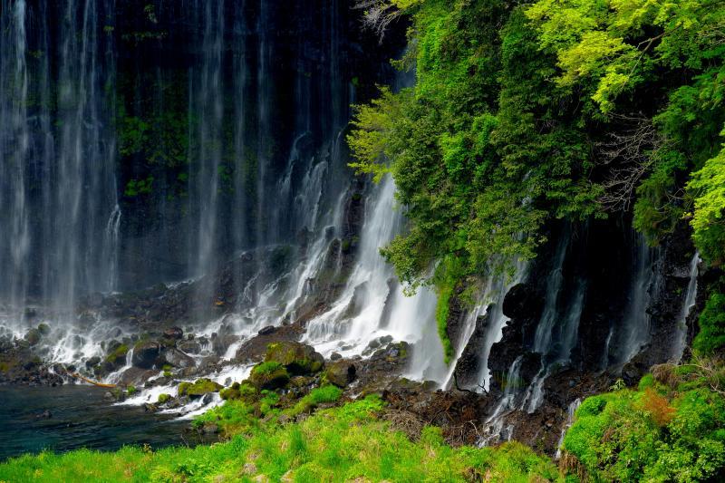 新緑の糸 | 新緑の眩しい緑の中に美しい滝の流れがありました。