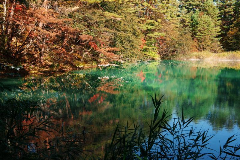 [ 紅葉の青沼 ]  光加減でブルーやグリーンに色が変化します。
