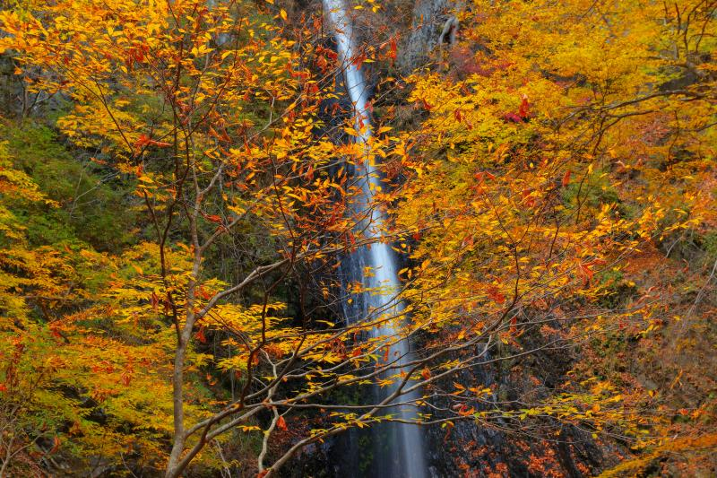 一条の流れ | 紅葉に包まれた岩盤を静かに水が流れ落ちています。林道奥にある静かで美しい空間。
