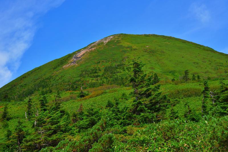 [ 夏の八甲田 ]  緑に覆われた八甲田の山々。雪深い地域なので草木の背丈がとても低くなっていました。