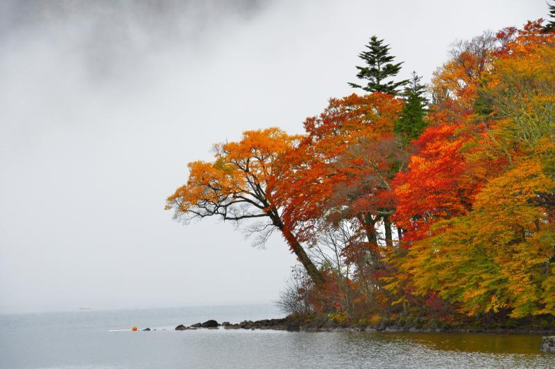 [ 湖畔紅葉 ]  立木観音前の駐車場から撮影。雨の中雲が湧き、男体山が雲に隠れました。幻想的な紅葉風景を楽しむことができました。