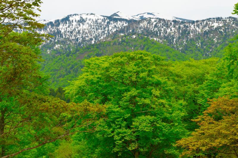 [ 残雪の至仏山と新緑 ]  照葉峡から尾瀬登山口の鳩待峠へ向かう途中に坤六峠があります。この付近からは尾瀬の峰々を望むことができます。