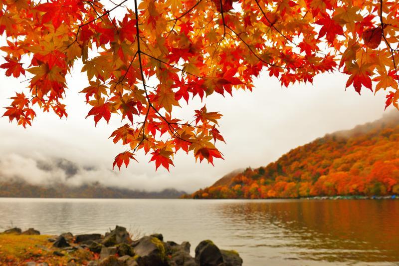[ 紅葉色づく湖畔 ]  小雨の中、中禅寺湖湖畔を散策。モミジの木の下で雨宿りしながらの撮影になりました。