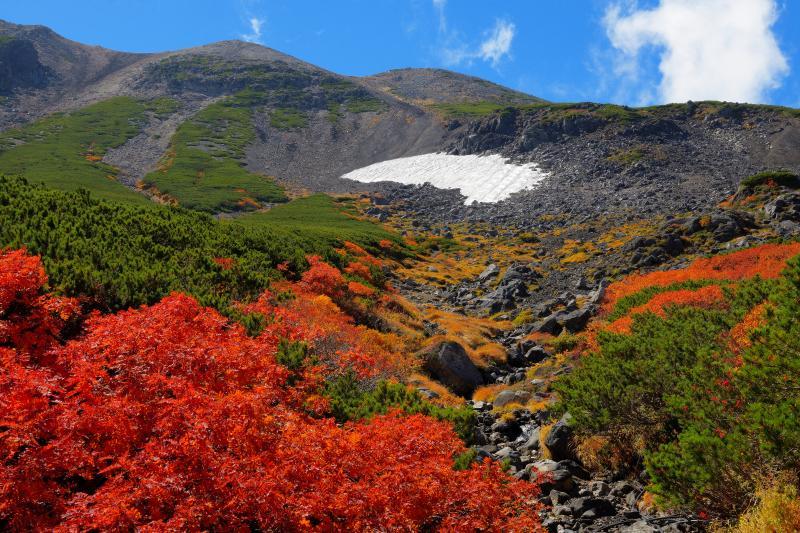 [ 雪渓と紅葉風景 ]  エコーラインの道路脇のナナカマドが真っ赤に色づいていました。青空と紅葉が美しい。