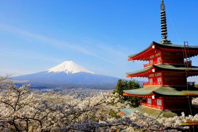 忠霊塔を囲む桜と富士| 忠霊塔と桜、富士吉田の街並みと残雪の富士山。日本らしい風景の要素が凝縮された場所。