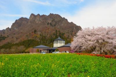 桜並木と妙義| 美術館横には桜並木、庭には菜の花畑が広がっていました。迫力ある妙義山が背後にそびえています。