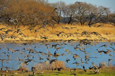 餌付け| 餌付けが行わており、たくさんの鳥を見ることができる場所です。