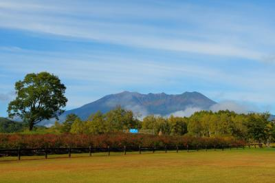 ナラの一本木と御嶽山  芝生広場の前には御嶽山の眺望が広がります。ナラの一本木は木曽馬の里の象徴とも言える存在です。