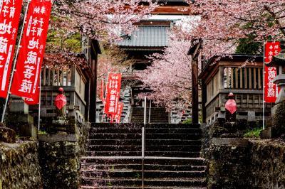 桜濡れて| 桜のピンクと赤ののぼりが良い感じです。階段に付いている花びらが綺麗でした。