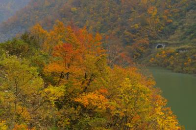 しっとり紅葉| ダム湖の周遊道路から撮影。それほど混んでおらず、静かに紅葉を楽しむことができました。