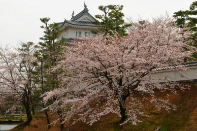 忍城と桜| 春になるとお堀の斜面に桜が花を咲かせます。