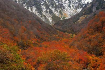 沢の紅葉| 一ノ倉沢へ行く途中のマチガ沢。真っ赤に燃える紅葉と冠雪した谷川岳の山肌が美しい。