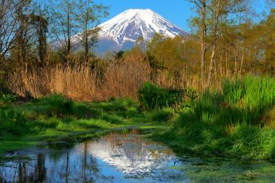 [ 逆さ富士 ]  小さな池に映る富士山を撮影できる場所です。