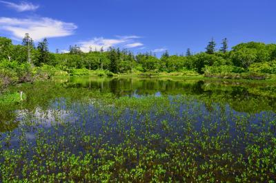 神仙沼| 初夏の新緑が綺麗でした。