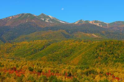 錦秋の乗鞍岳と月| 林道の木々の隙間から紅葉の乗鞍岳を一望することができます。