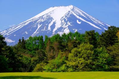 新緑と富士| 広い芝生の先に林があり、その先には大迫力の富士山が見えます。