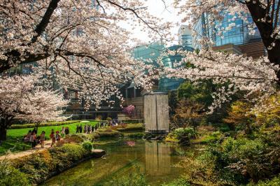 毛利庭園の桜| ヒルズとテレビ朝日の間には毛利庭園があります。池を取り囲む桜が美しい。