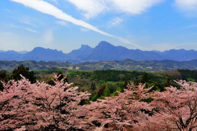 雲の一本道 | 桜溢れる「後閑城址公園」。奥には奇岩・妙義山がそびえています。