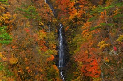 錦秋の滝| 山一面が真っ赤に燃え上がり、その中にある一条の美しい流れに目を奪われます。