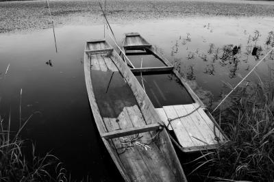 和舟| 渡良瀬遊水地を流れる川の岸に古い木製の和舟が並んでいました。