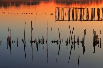 静かなる残骸| 船着場の古い支柱が水面に飛び出しています。哀愁を感じる夕暮れのひととき。
