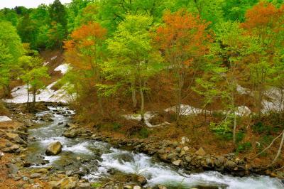 残雪と新緑の中を| 残雪が残る山の斜面、萌える新緑、透明度の高い渓流。日本の原風景を感じることができる場所です。
