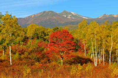 真っ赤な楓と乗鞍岳| 一の瀬園地は植生豊かで紅葉の時期は高原一帯が華やかに彩られます。
