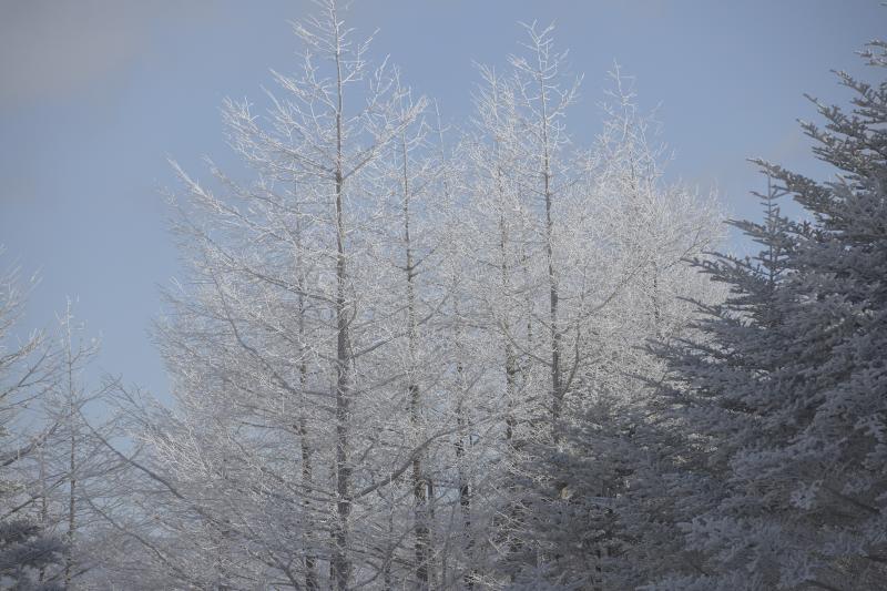 [ 霧氷 ]