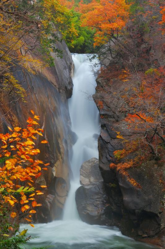 [ 紅葉の仙娥滝を縦構図で ]  岩盤を深く削った仙娥滝。両側の迫力ある岩を縦構図で切り撮りました。