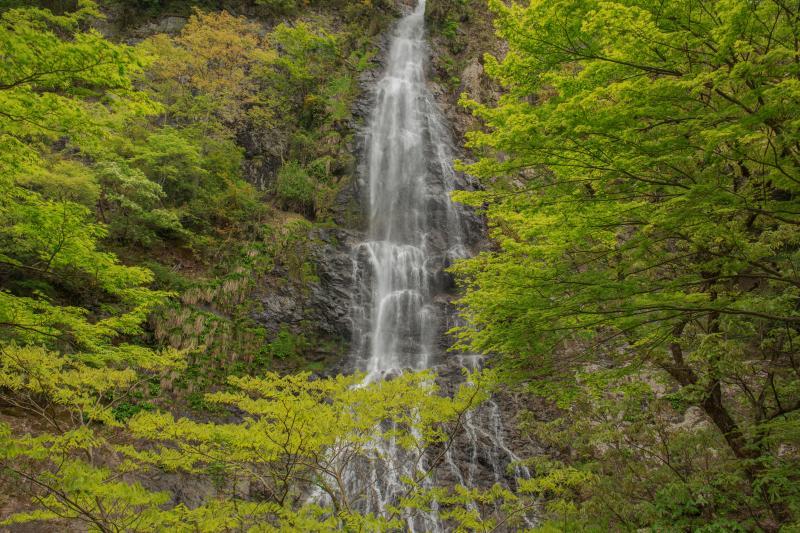 新緑の天滝| 新緑萌える秘境で天から静かに降り注ぐ水の流れは、天然のミストシャワー。
