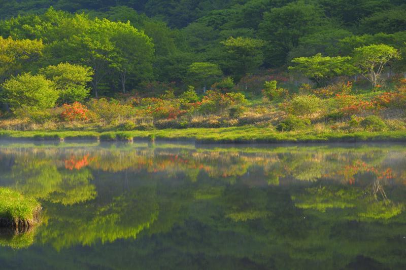 ツツジのシンメトリー| 朝霧が消えると、湖畔の木々とレンゲツツジが水面に映り込んできました。