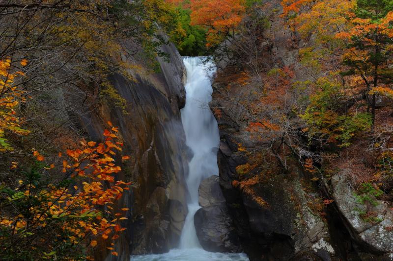 [ 紅葉の中を昇る竜 ]  一本の力強い流れの滝です。岩の周囲は日本庭園のような美しい紅葉になっています。
