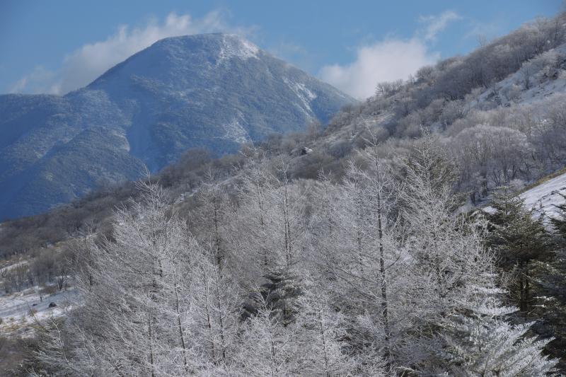 [ 霧氷と日本百名山「蓼科山」 ]  雄大な蓼科山と霧氷のコラボレーション。蓼科山から雲が湧き上がっていました。