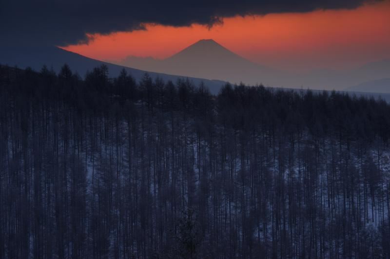 [ 朝焼けと富士山 ]  霧ヶ峰からは富士山が良く見えます。カラマツ林の奥、空が赤く焼け、富士山のシルエットが美しく浮かび上がっていました。