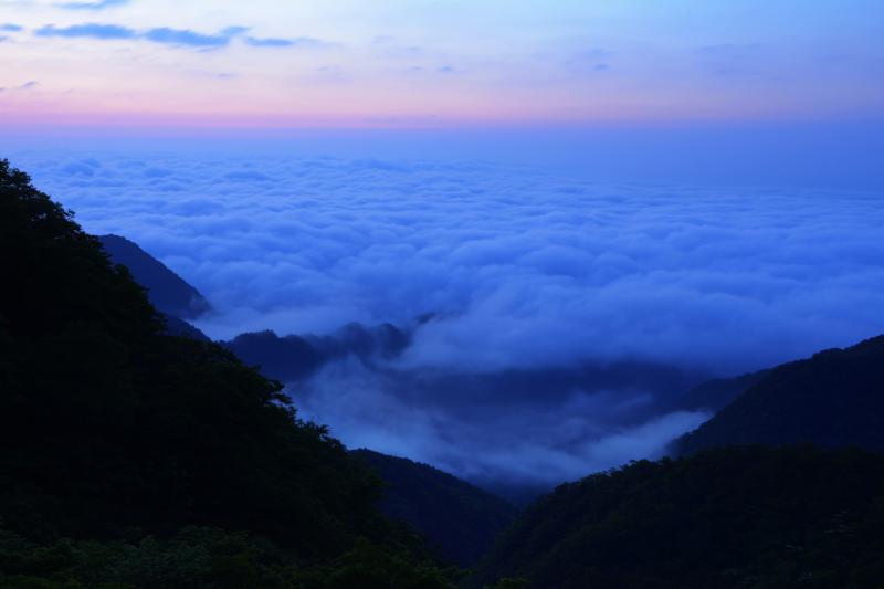 [ 雲海躍動 ]  空がピンクに染まり気温が上がると、雲海が波のように動き出します。