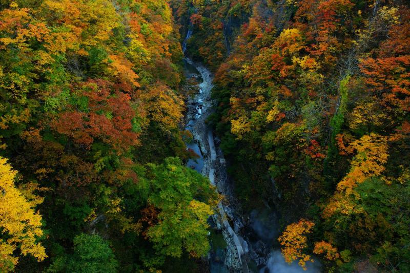 [ V字谷の彩り ]  橋の上から下を覗き込むと紅葉絶景が広がっています。あまりの高さに足がすくみます。