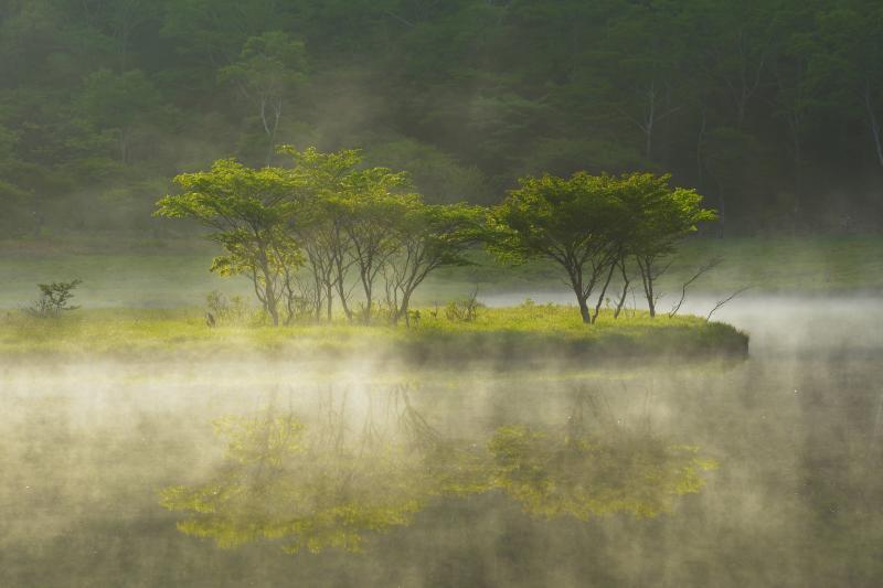 [ スポットライト ]  早朝、水面から朝霧が湧き上がり、差し込んでくる朝陽によって木々が輝きます。