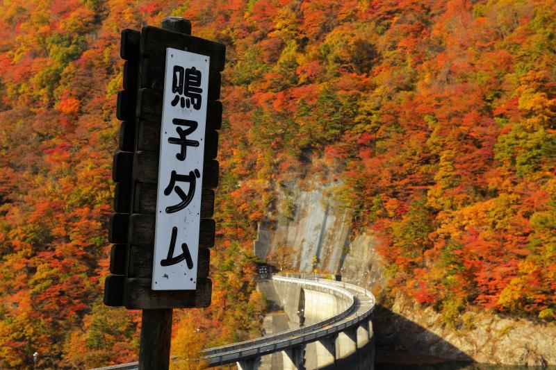 錦秋の鳴子ダム| ダム堤のアールが特徴的な鳴子ダム。紅葉はピークを迎え、太陽の光を浴びた紅葉が眩しいほどに輝いていました。